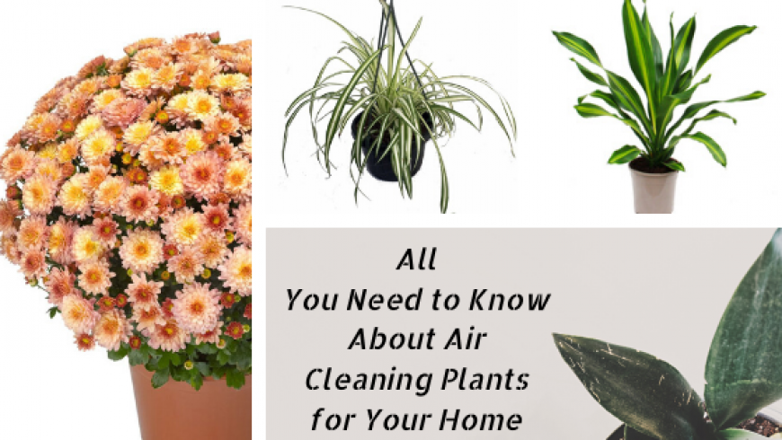All You Need to Know About Air Cleaning Plants for Your Home